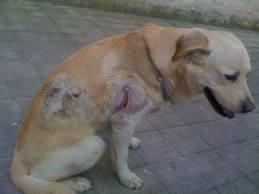 Roma, Villa Ada: cane accoltellato dopo una lite tra due uomini