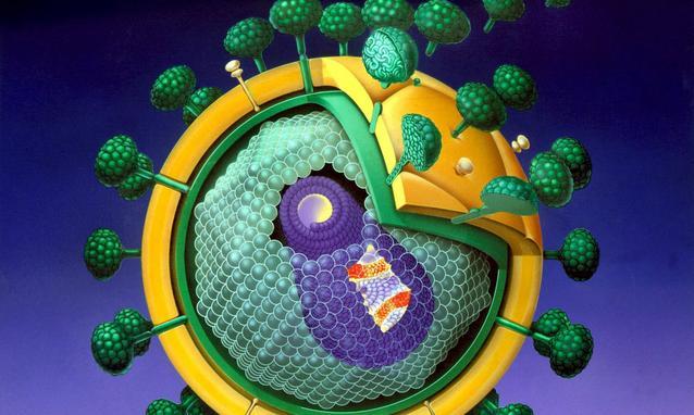 Una nuova speranza per combattere i tumori nasce da una proteina dell' HIV
