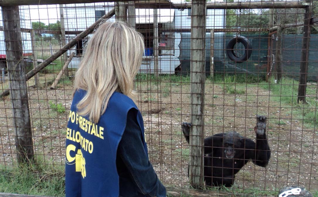 Latina: sequestrato lo zoo safari
