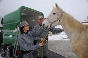 Cavalli maltrattati Colle Ferro