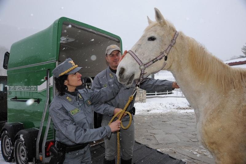 Cavalli maltrattati a Colleferro: adesso hanno una nuova casa